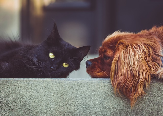 pes a mačka.jpg