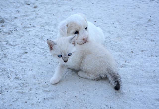 šteňa a mačiatko.jpg