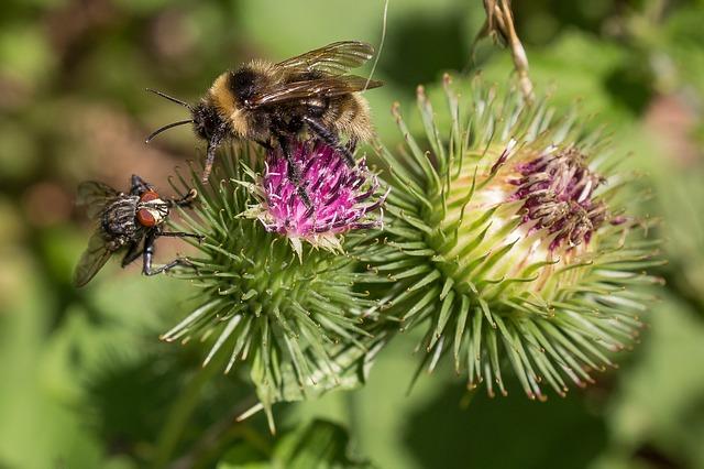 Včela na kvete.jpg